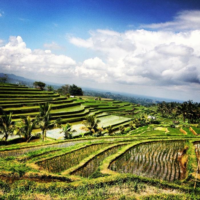 risaie Bali