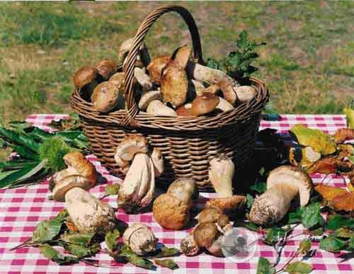 Forni, funghi e… gastronomia