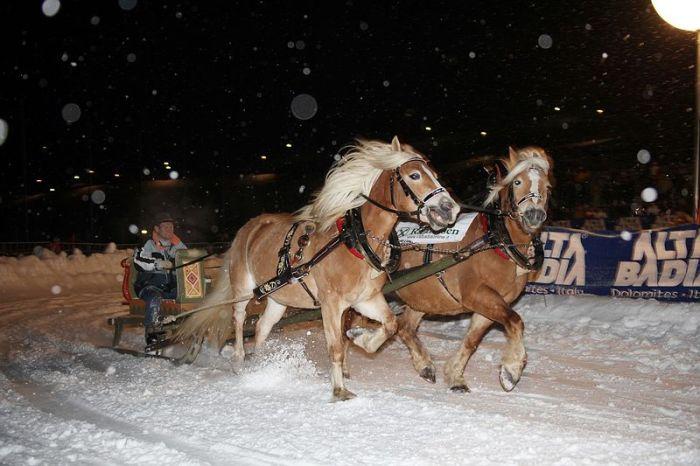 gara cavalli